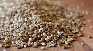 Foods Identified As 'Whole Grain' Not Always Healthy