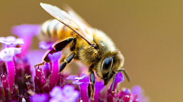 Bees Use 'The Force' To Find Flowers