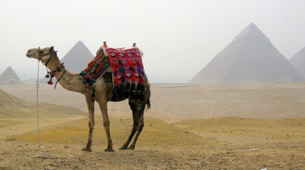 Walking Backward In Cairo