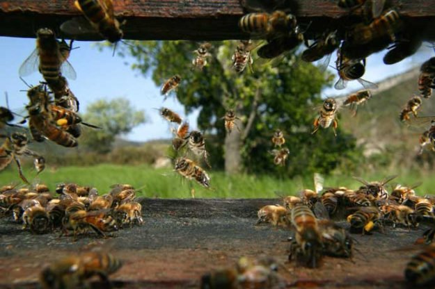 Genetically Modified Organisms And Bees