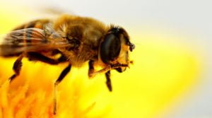Pesticide Producers Turn To 'Bee-Washing' To Fight Backlash