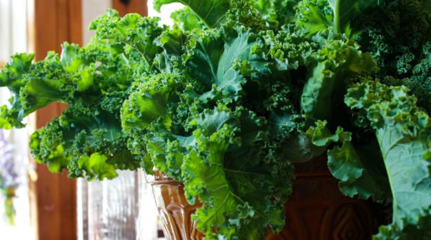 This is your Brain On Kale