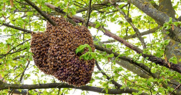 Saving Bees One Tree At A Time