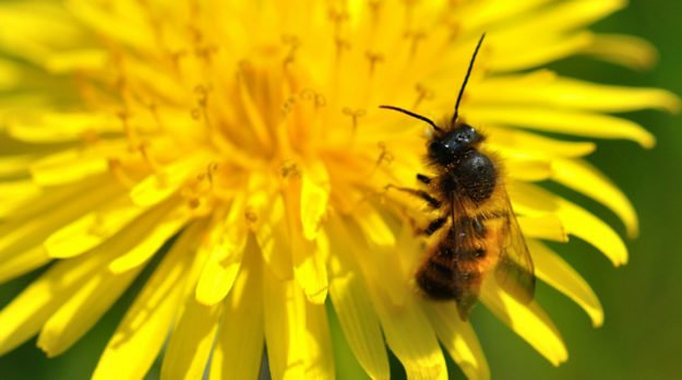 Honeybees Can't Smell The Flowers