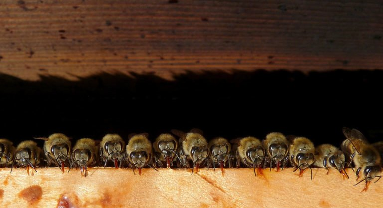 Top 10 Most Interesting Beehive Locations