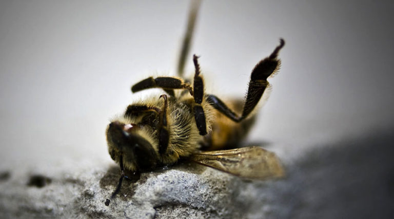 Mass Honeybee Deaths Trigger Rise<br>In Almond Prices