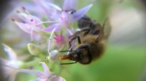Beekeeping Industry Demands EPA Reevaluate Toxic Pesticides