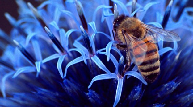 10 Surprising Statistics About Honeybees