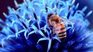 10 Fascinating Facts About Honeybees