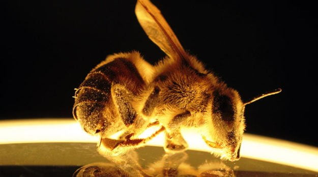 Bee Killer Or Another Red Herring?