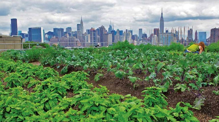 Whole Foods Leads The Way To Greener Rooftops