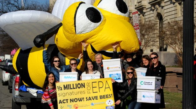 Half Million Sign Bernie The Bee Petition To Save The Bees