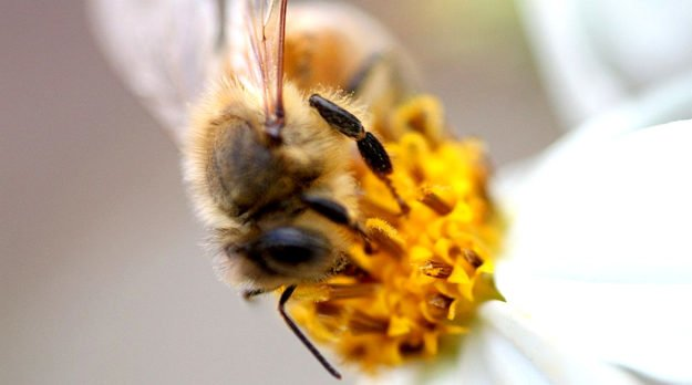 The Beehive Effect: Spiritual Healing In The Field