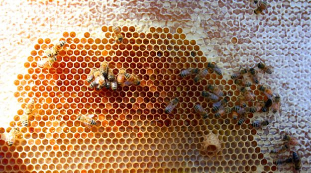 How DIY Beehives Can Open Solutions