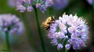 15 Plants To Attract Bees