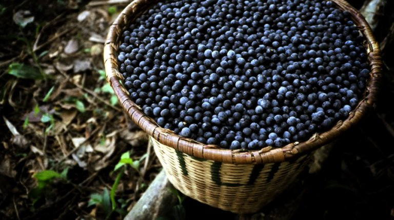 The Truth About Acai Extract, Oil And Other Products