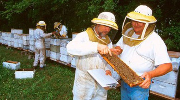 Causes Of Bee Population Decline Challenged In California