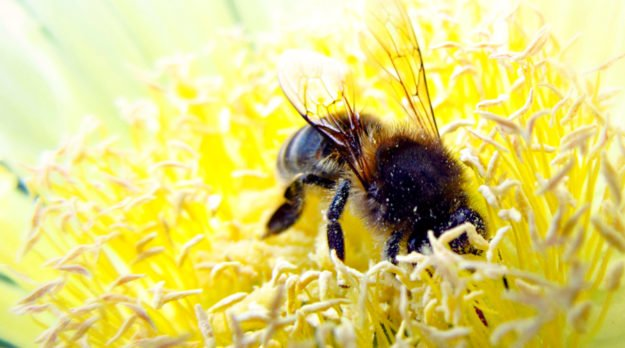 Why Bees Are Dying And What We Can Do To Save Them