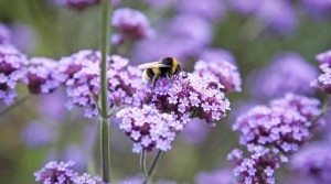 News Today About British Bees