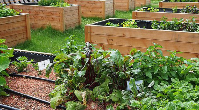 Garden Benefits: How To Build A Raised Bed