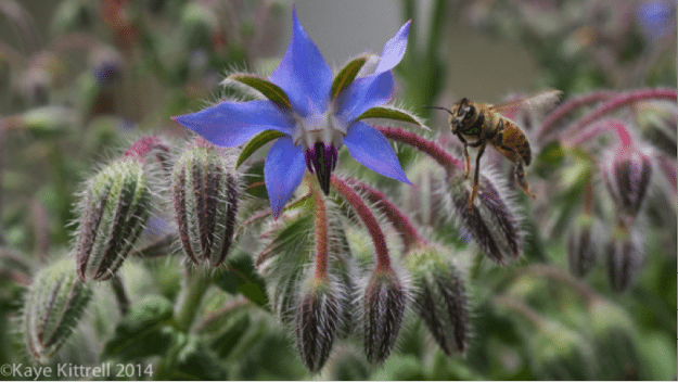 Are you sure your plants are neonics-free?