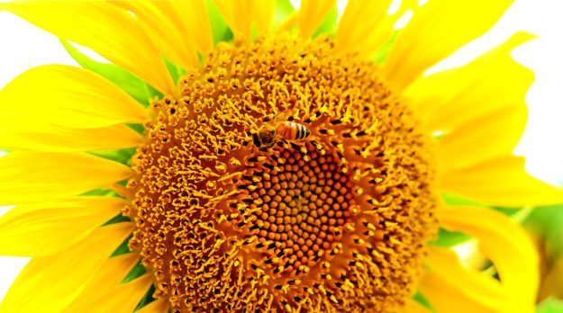 Bayer, Syngenta Sued By Canadian Beekeepers For $400 Million