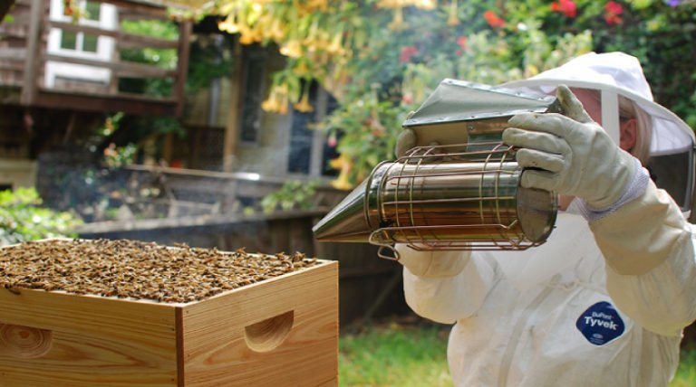 3 American Cities Get Serious About The Honeybee