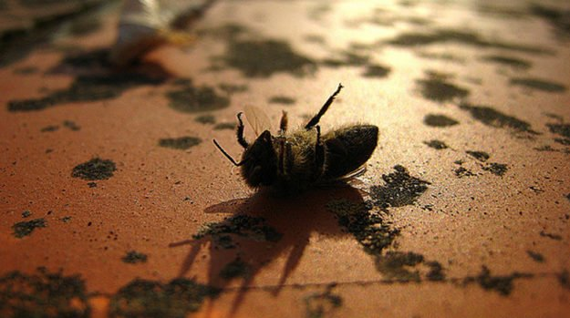 Environmental Protection Agency Says Neonics Provide Little To No Benefits