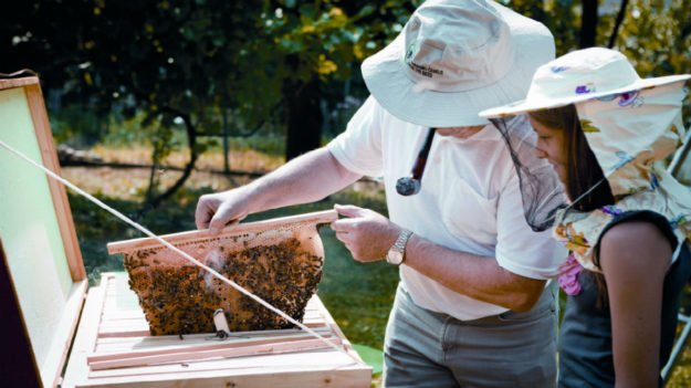 5 Horrifying Truths About Pesticide Use & Bees