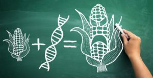 GMOs: What You Need To Know About These Seeds Of Sickness