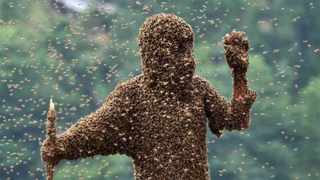 EPA Finally Issues Bee Pesticide Moratorium: But Is It Enough?
