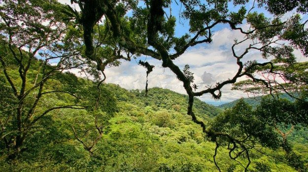 Tree Jenny And Rainforest Conservation In Costa Rica