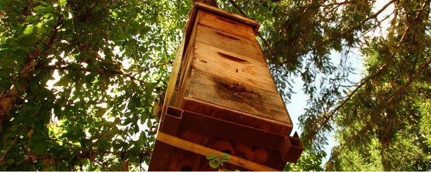 Tree Hive Bees — Scientific Research To Save The Honeybees