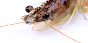 10 Most Incredible Benefits Of Krill Oil And Omega-3 Fatty Acids
