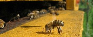 Pottery Reveals Ancient History Between Humans And Honeybees