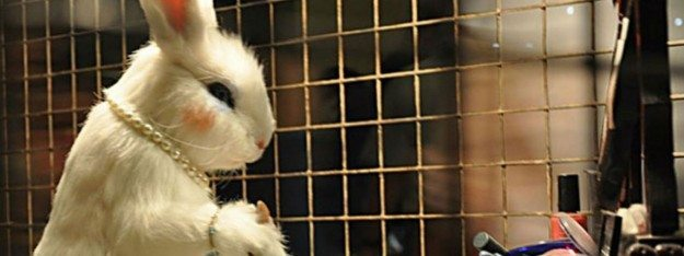 Canada Bans Animal Testing, But Humans Are #1 Guinea Pigs Still