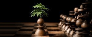 The Battle For Cannabidiol (CBD): Big Pharma VS The People