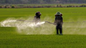 Systemic Pesticides Are The New DDT. Now What?