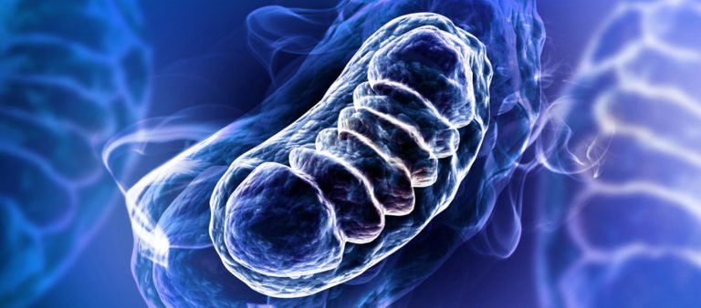 10 Ways To Combat Mitochondria Misconduct And Gain Energy Today