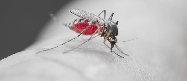 Avoid Diseases From Mosquitoes: 6 Species To Look Out For