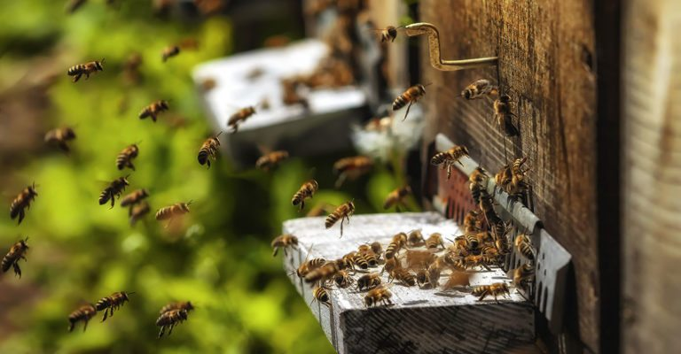 Legal Action Taken Against EPA to Protect Bees Against Pesticide Laden Seed Coating