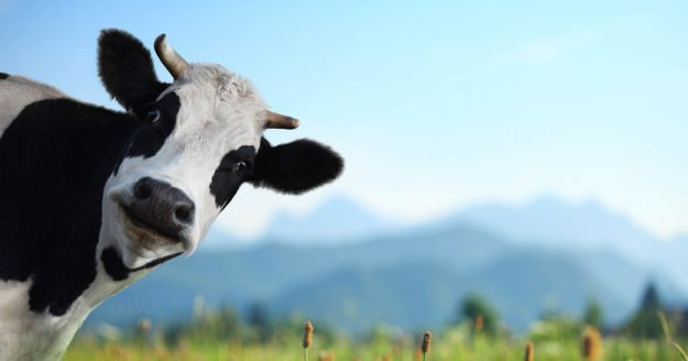 Having A Cow Over Cattle Supplements: 7 Ways To Protect Yourself