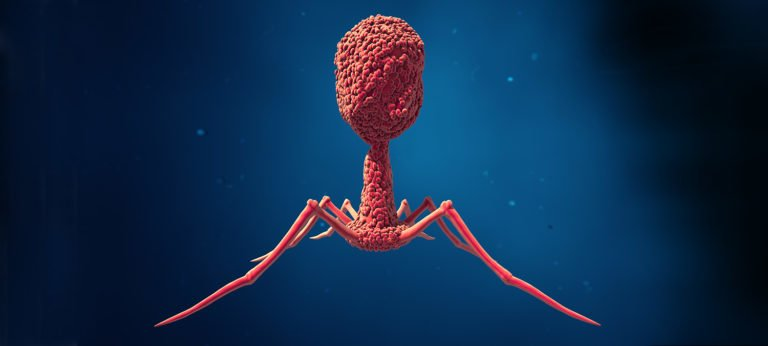 Going Viral: Surprising Findings About Our Immune System