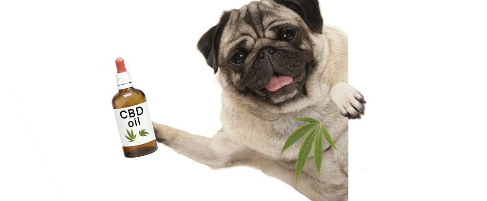 benefits cbd oil for dogs
