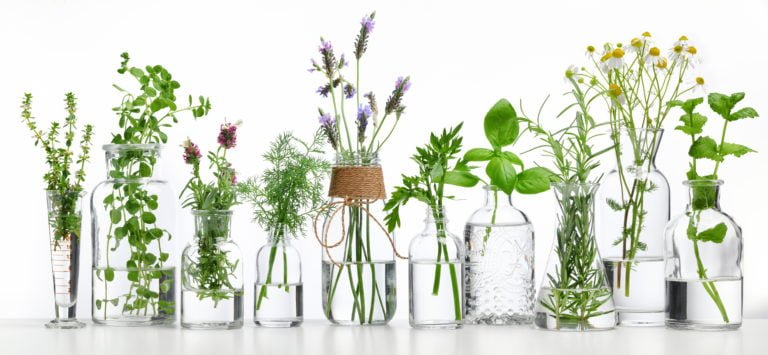 Health Benefits of Terpenes: 2 Compounds With Impressive Potential