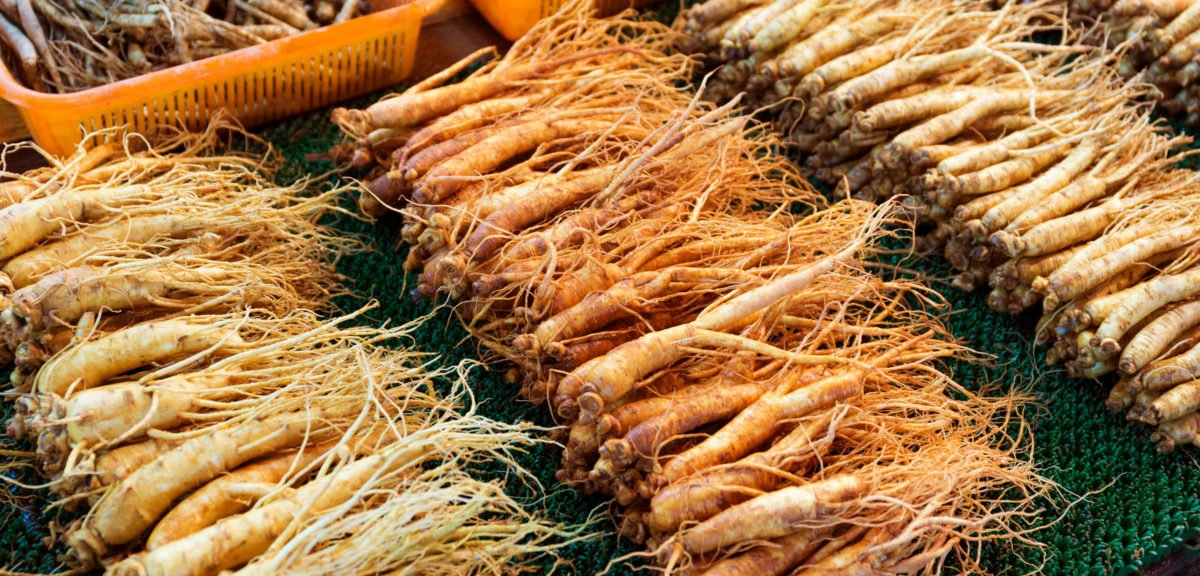 selling Ginseng Benefits