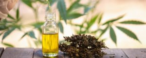 Purchasing CBD: 5 Important Standards For The Best Medicinal Hemp Oil