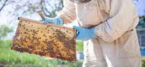 checking honey bee health for deformed wing virus