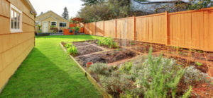 How To Grow A Superfood Victory Garden
